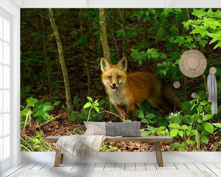Beispiel fototapete: Junger Rotfuchs  - Little Red Fox von Christiane Schulze