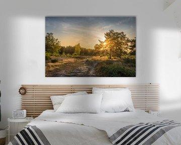 Sonnenuntergang in Wells in der Veluwe von John van de Gazelle