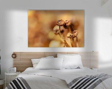 Mooie uitgedroogde paddenstoelen