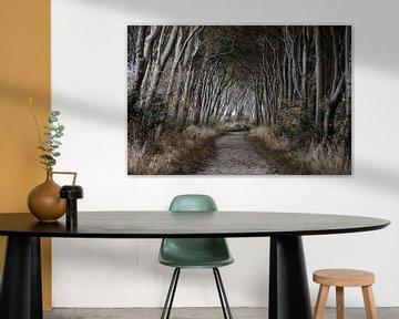 bos zwarte struik eiland Poel van Joachim G. Pinkawa