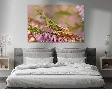 Gedetailleerde Sprinkhaan op de bloeiende heide