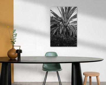 Valencia, spanische Palmen in Schwarz-Weiß von Lindy Schenk-Smit