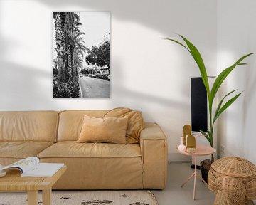 Palmen in Valencia, einer alten Stadt in Spanien von Lindy Schenk-Smit