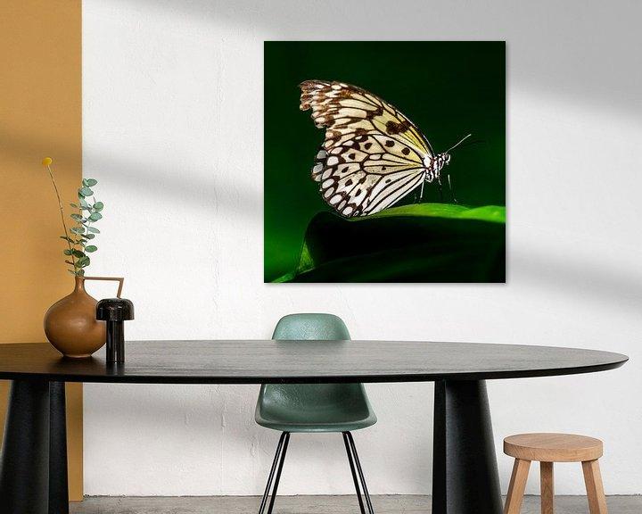 Sfeerimpressie: Papiervlinder (Idea leuconoe) van Frankhuizen Photography