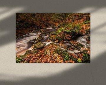 Herfst langs de Hoëgne in de Hoge Venen, België