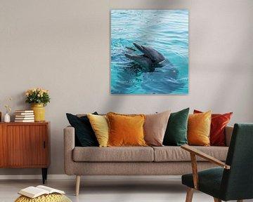Delphin fängt einen Fisch von Compuinfoto .