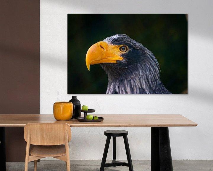 Beispiel: Amerikanischer Weißkopfseeadler von Joey D.