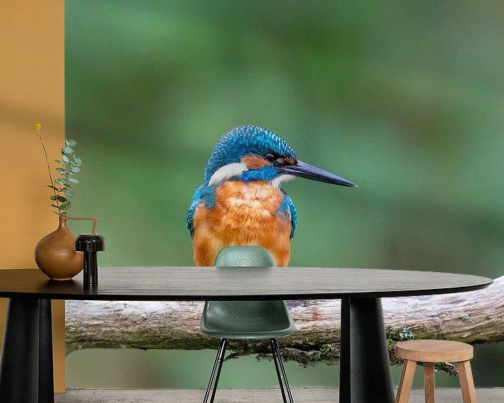 Beispiel fototapete: Eisvogel (Alcedo atthis) von Dirk Rüter