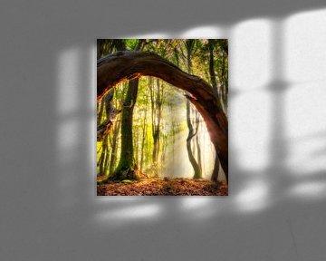 Zonnestralen door een boog van hout van Jaimy Leemburg Photography