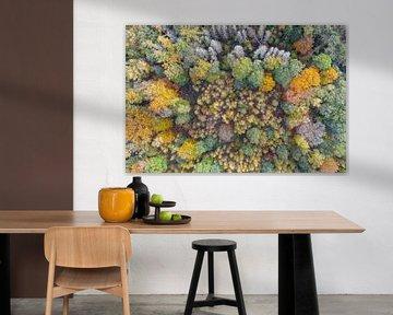Herfstkleuren van bovenaf van Jeroen Kleiberg