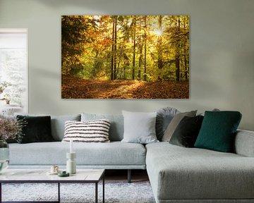 Sonniger Herbstwald von Tobias Luxberg