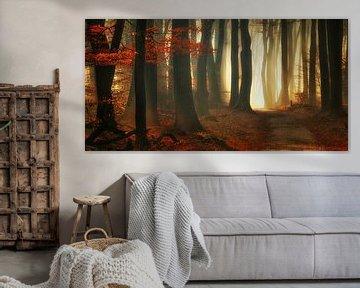 Rode herfst (landscape)
