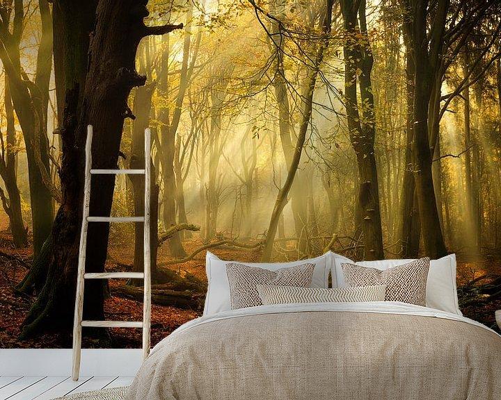 Impression: Speulderbos en automne (format XXL, idéal pour le papier peint) sur Rigo Meens