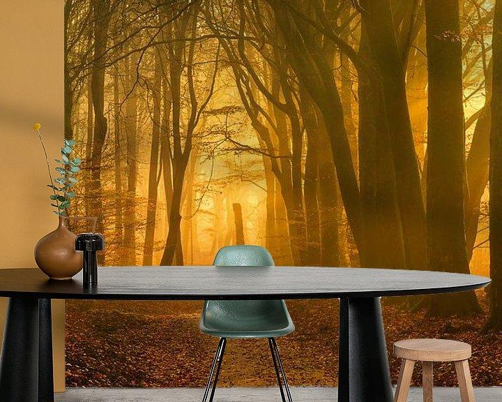 Sfeerimpressie behang: Het begin van een zonnige dag in het Speulderbos (XXL formaat) van Rigo Meens