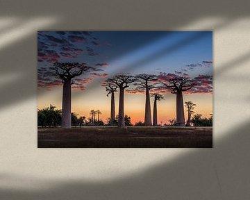 De Allée des baobabs tijdens zonsondergang van Annette Roijaards