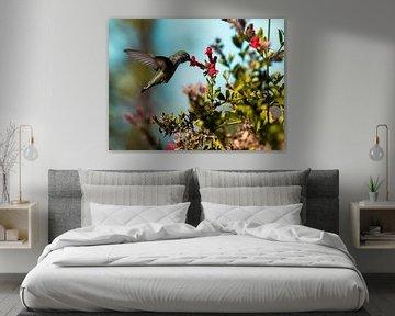 Kolibrie in San Francisco van Rutger van Loo