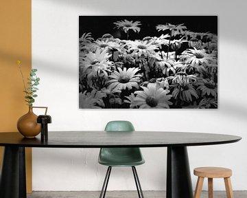 Blumen (schwarz und weiß) von Rob Blok