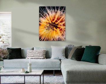 tube-dwelling anemone (ceriantharian) van Enak Cortebeeck