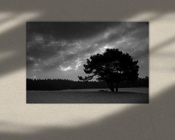 Tree silhouette at sunrise von Marco de Groot