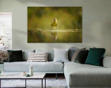junge Blaumeise beim Blick auf das Spiegelbild von Petra Lakerveld