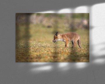 Junger Fuchs auf der Düne von Joop Zandbergen