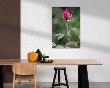 Violette Rose von Marijke Arends-Meiring