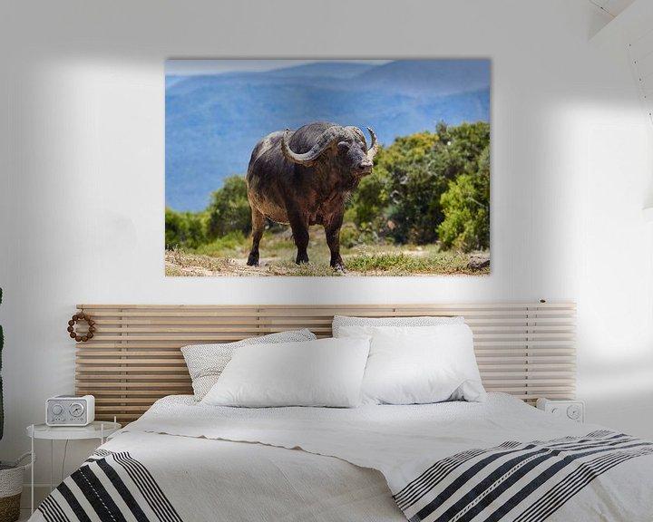 Beispiel: Altafrikanischer Büffel von Jolene van den Berg
