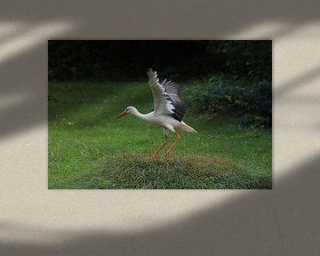 Storch von Heike Hultsch