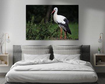 Storch auf der Wiese von Heike Hultsch
