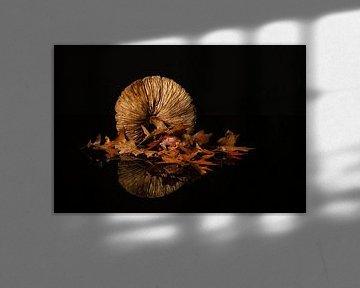 Stilleben Herbst von Monique van Velzen