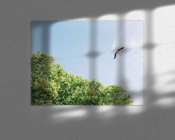 Ooievaar vliegt in de natuur van Portugal van Youri Claessens