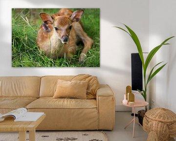 Bambi van Heike Hultsch