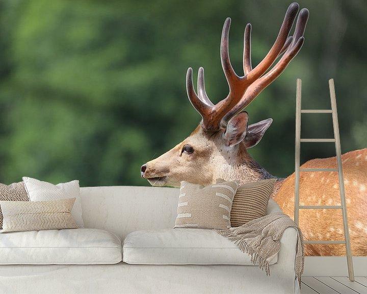 Beispiel fototapete: Hirschporträt von Heike Hultsch