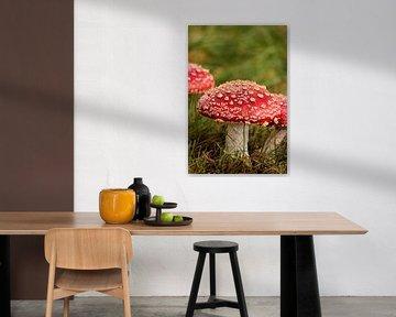 Chapeau de champignon rouge sur Heike Hultsch