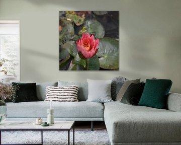 Rote Seerose von Elke Dag Een Foto