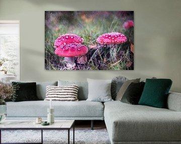 Rétrospective du champignon sur Heike Hultsch