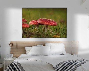 Des champignons sur la prairie d'automne sur Heike Hultsch