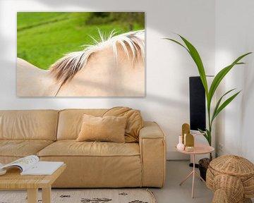 Abstracte foto van paarden rug en manen