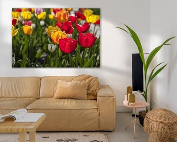 Tulpen in rood en geel van Norbert Sülzner