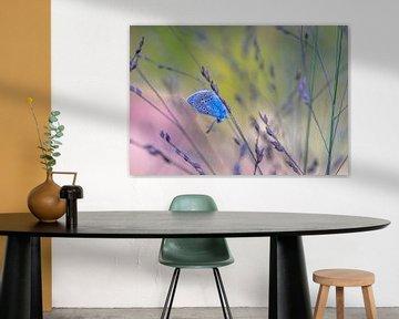 Schmetterling im Gras von René van Leeuwen