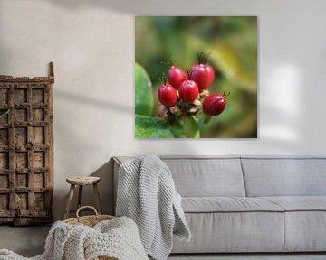 Rote Beeren von Elke Dag Een Foto
