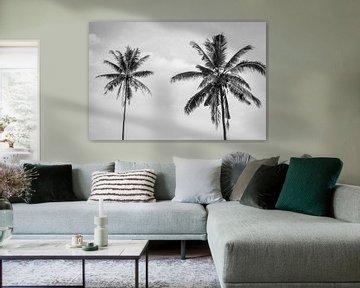 Zwart wit palmbomen op Bali