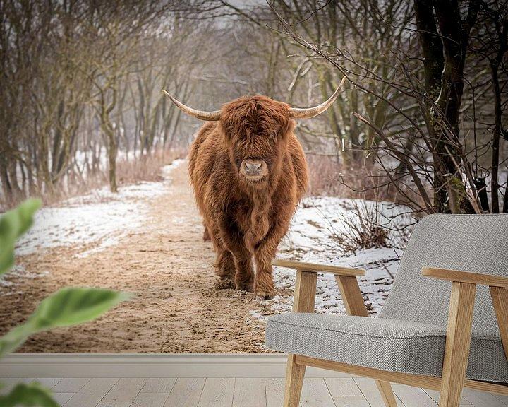 Beispiel fototapete: Schottische Hochlandbewohner bei einem Spaziergang durch die Schneedünen. von Claudio Duarte