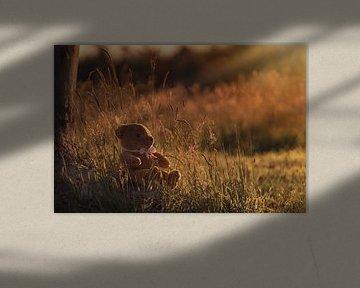 Teddybeer zittend tussen hoog gras tijdens gouden uurtje van Mayra Pama-Luiten