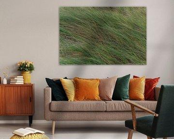 L'herbe des dunes