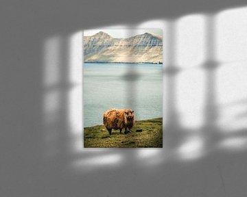 Schaap op de Faeröer Eilanden van Expeditie Aardbol
