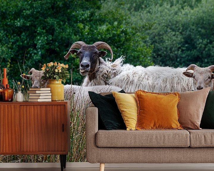 Impression: Moutons à grosses cornes sur Anjo ten Kate