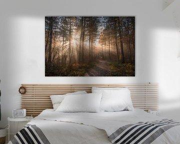Herfstbospad  in de Brunssummerheide en zonnestralen van John van de Gazelle
