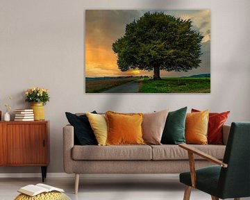Sonnenuntergang am Lebens Baum von MindScape Photography