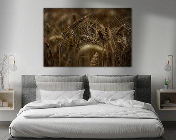 Het graan in het veld van Bernhard Steinbusch